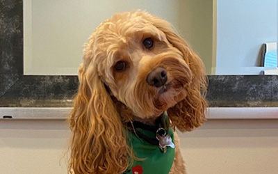 Anxious About Going to the Dentist?  Dogs Like Leo can Help
